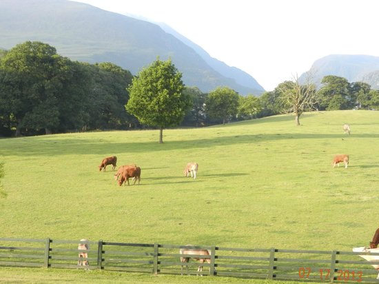 The Dunloe : Nice to see this in the morning when you wake up!