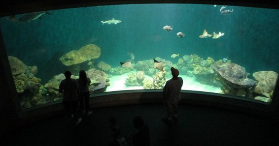 National Mississippi River Museum Aquarium Huge
