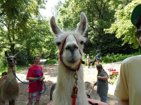 Sevierville tennessee with kids : llama Trek
