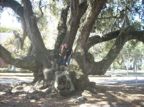Lover's Oak: Under the oak