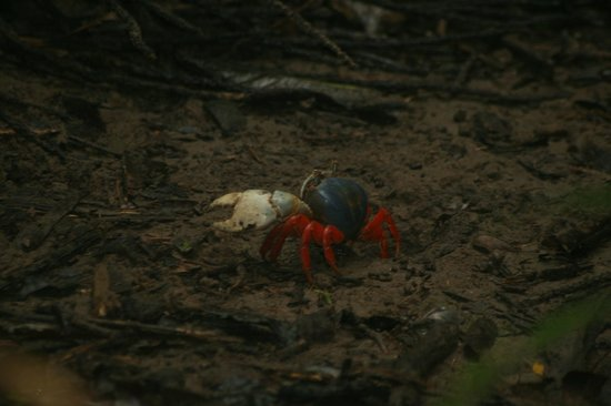 Parque Nacional Curú: These crabs are very pretty and they are everywhere