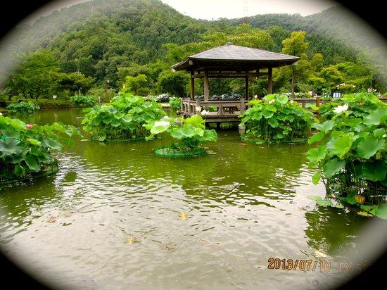 Minamiechizen-cho, Japan: Um pontinho de descanso e também para apreciar as flores na sombra.