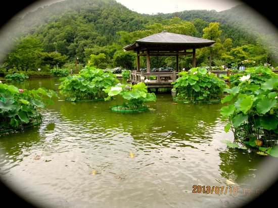Restauranter i Minamiechizen-cho