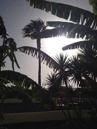 IBEROSTAR Lanzarote Park: Palm trees within garden