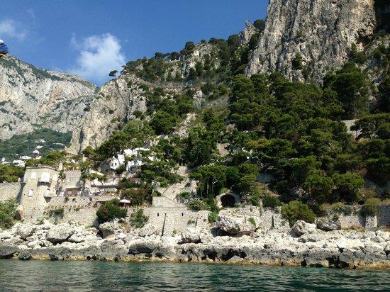 Capri Whales di Wendy : Capri