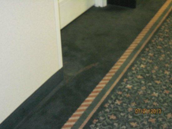 La Quinta Inn & Suites Seattle Bellevue / Kirkland : Outside hallway stains again