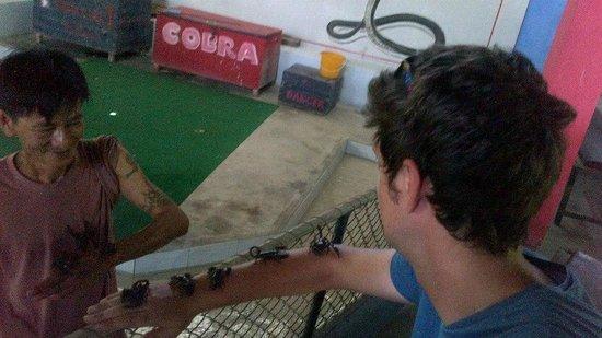 Samui Snake Farm: Scary