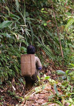 Annah Rais Longhouse Adventure: A woman goes food collecting