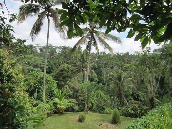 Pandawas Villas: Jungle view
