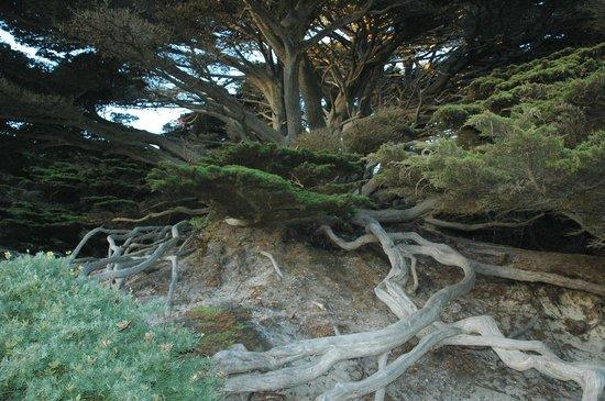 Fernwood Resort: Roots of Tree Surviving!