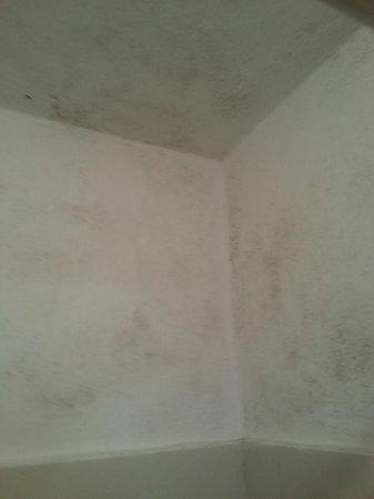 Locanda La Lanterna: La parete muffosa della vasca-doccia...