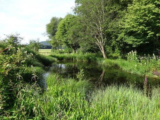 Seewalchen am Attersee, Austria: Kleiner Teich im Gerlhamer Moor