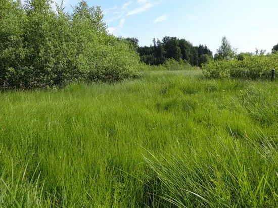 Gerlhamer Moor
