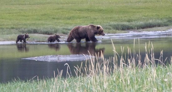 Great Alaska Adventures: Mother and spring cubs