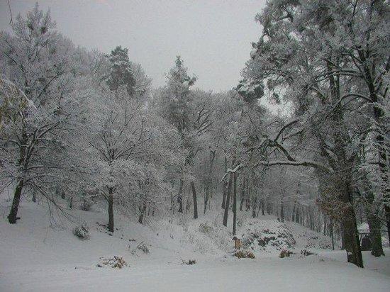Sovi Dom : park