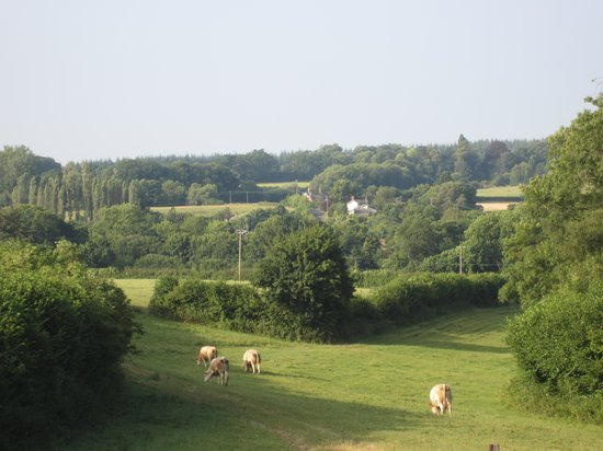 Thorps Farm Bed and Breakfast : poor bliss looking towards alderholt