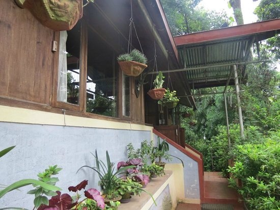 Holumba Haven : Tree Top cottage