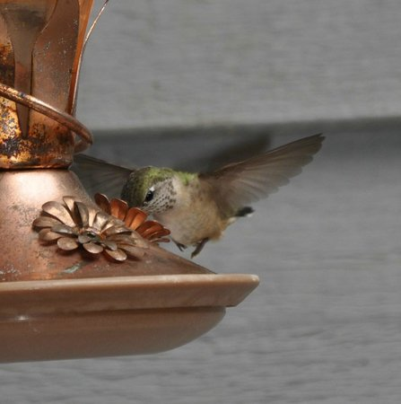Ida-Home B&B: Frequent visitor for breakfast!