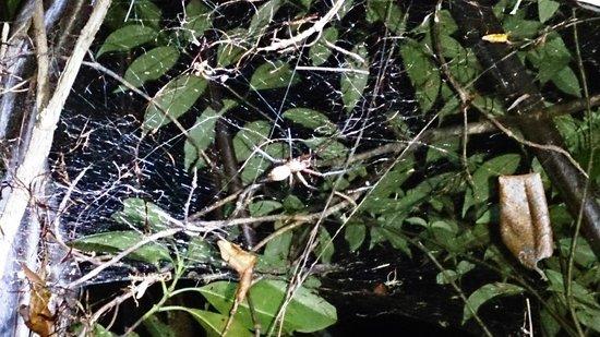 Adventure Puketi: Spider Man