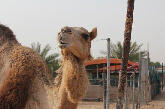 One&Only Royal Mirage Dubai : Tschüß bis bald, see you again