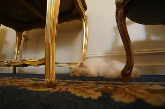 Le Bristol Paris: hotel cat wasn't a joke. he's there.