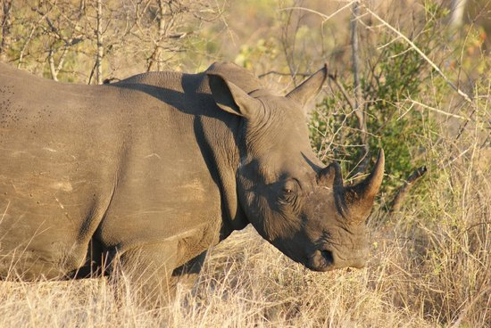 Tydon Safari Camp: White rhino