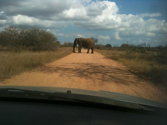 Olifants Rest Camp: AFRICAN ROAD BLOCK, DELAYED ABOUT 20 CARS IN ALL FOR ABOUT 45 MINUTES