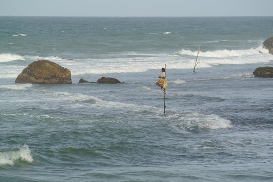 Frangipani Tree: Stilt Fisherman on the local beach