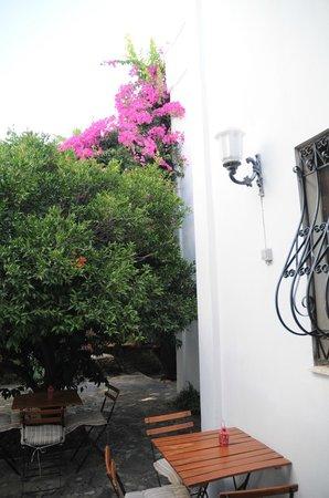 Hotel Gulec: Garden