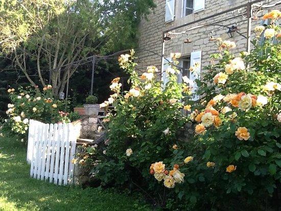 Les Vents Bleus: rosiers en fleurs dans le jardin