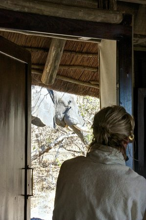 Wilderness Safaris Kings Pool Camp: Who needs to go on a game drive?