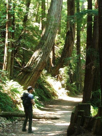 Skyline to the Sea Trail : Redwood Groves