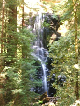 Skyline to the Sea Trail : Berry Creek Falls