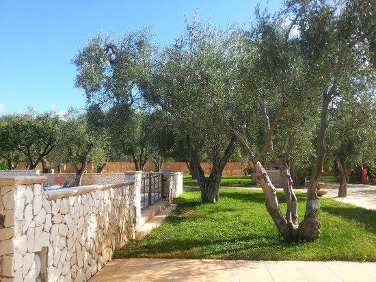 Villaggio San Matteo Resort: dentro al villaggio pieno di uliveti