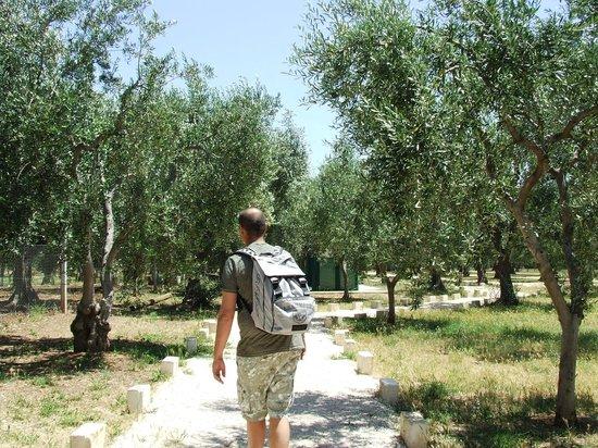 Villaggio San Matteo: breve passeggiata sotto gli ulivi dal villaggio per arrivare alla spiaggia