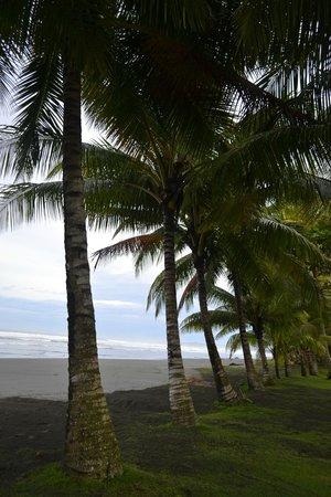 Alma del Pacifico Beach Hotel & Spa: THE SEA THRU PALMS