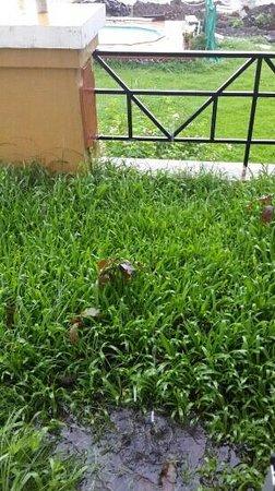 Ghanvatkar Bunglow at Zirad : unkept overgrown grass with water in balcony