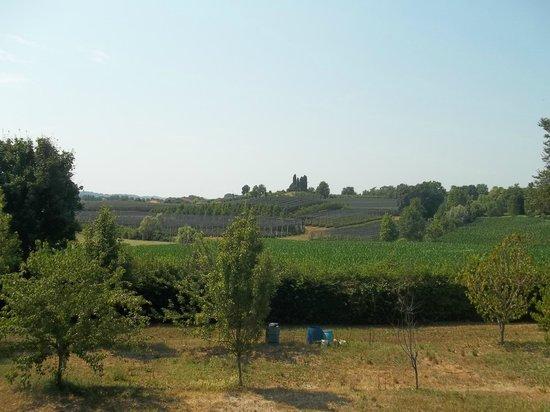 Azienda Agricola La Giorgiana: colline circostanti