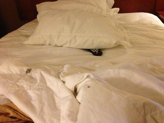 Creekside Lands Inn: BED BUGS EVERYWHERE!