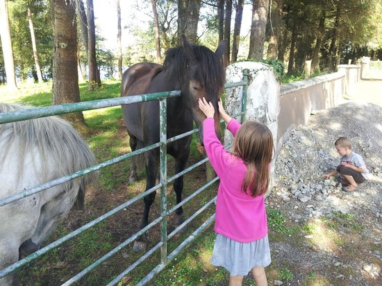 Clondanagh Cottage : Horsin' around