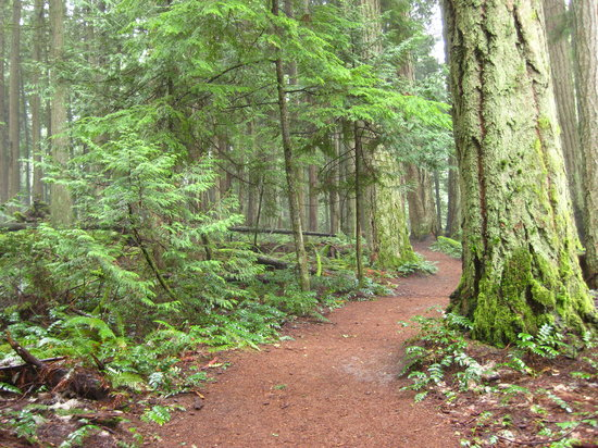 Thetis Lake Park Trails: Click to enlarge