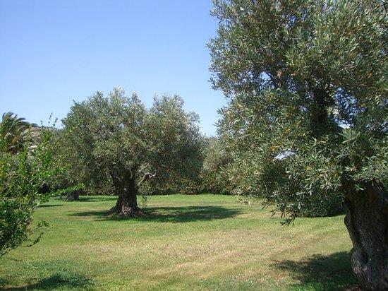 Rada Siri: Garten mit vielen alten Olivenbäumen