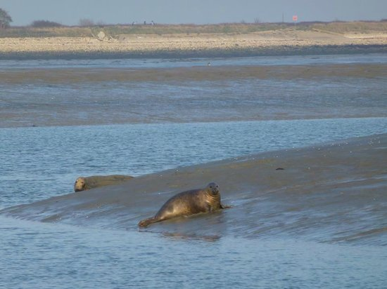 Cafe Cruises: maybe spot some seals