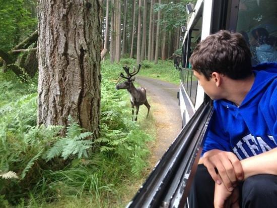 Northwest Trek Wildlife Park: caribou and boy