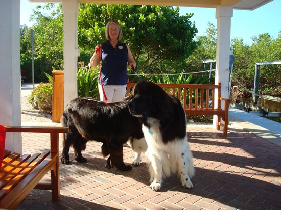 Hyatt Regency Coconut Point Resort and Spa: Hoss and Honey Bear and their Beautiful Owner