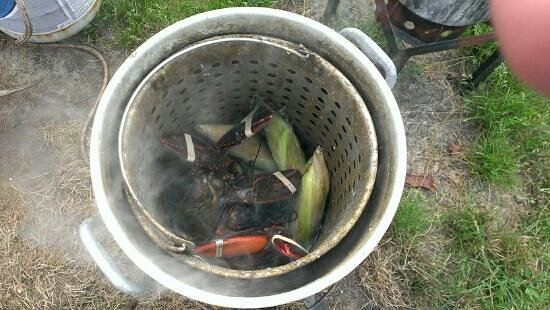 Bar Harbor Campground KOA: Lobster in the pot