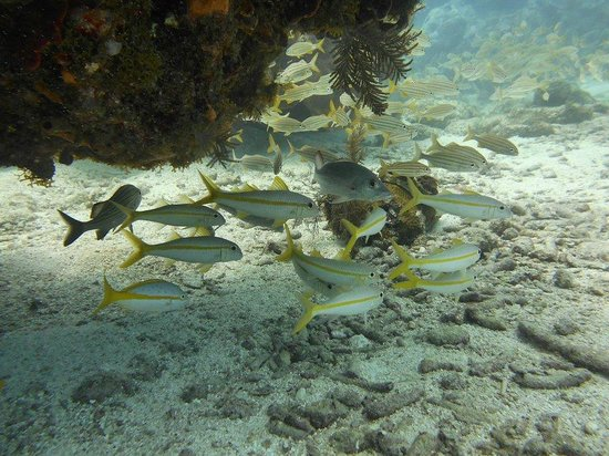 20 picture of sail fish scuba key largo tripadvisor