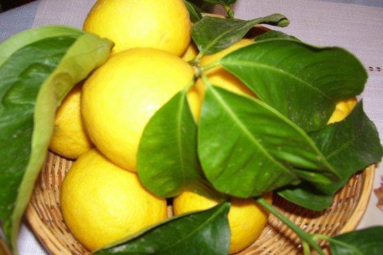 B&B MareBosco : I nostri limoni