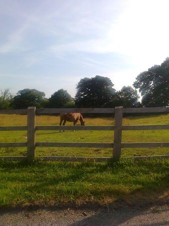 The Stables Guest Accommodation: surrounded by fields and meadows