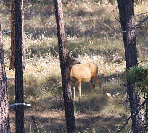 Flathead Lake State Park: Deer on wild Horse Island